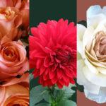Flowershow-design-SM.jpg